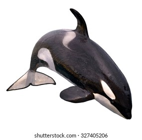 killer whale (Orcinus orca) jumping isolated on white background