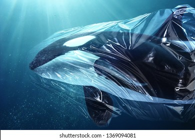 Killer whale (Orcinus orca) trapped in a plastic bag. Pollution in oceans concept.