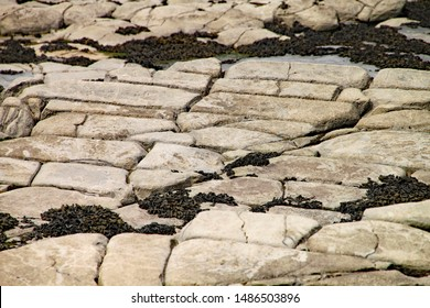 dating fossiler av Strata