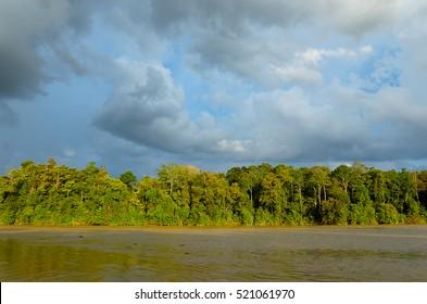 Kinabatangan river, nature of Malaysia, rainforest and jungle of Borneo island