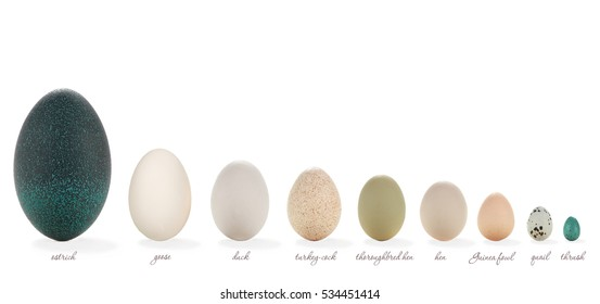 kind of egg of different birds on a farm