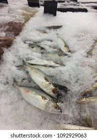 The kind of fish with ice in the market for sell catch in the sea by fisherman.