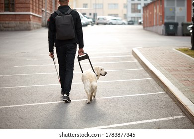 kind golden retriever helps a person to navigate in street, blind man need help while walking