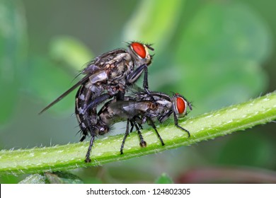 a kind of insects named red-headed flies on a green leaf, in the natural wild state, Luannan County, Hebei Province, China.