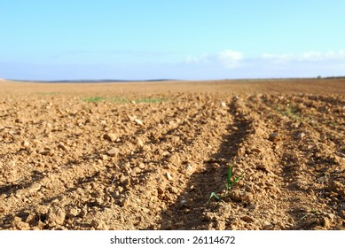 Kind of the ploughed field and the first sprouts on it