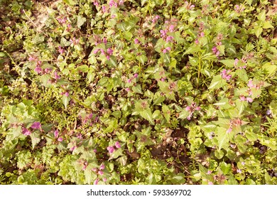 kinds of purple  flowers in the meadow, note shallow depth of field