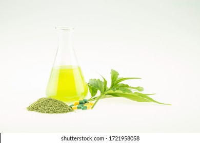 King of bitters is a bitter herb with a cool effect, therefore is a good herbal remedy and has properties in treating colds.