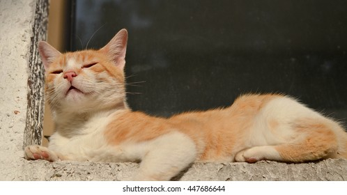 King of cat. Adorable cat laying on the window sill and proudly looking at the distance. Enjoying life concept.