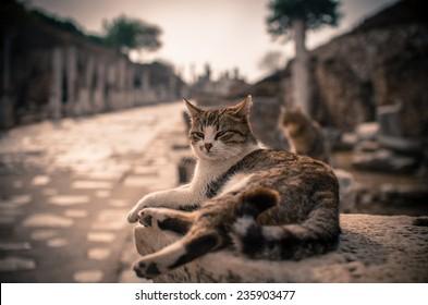 King cat of Ephesus
