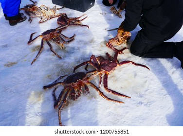 King crab hunting in Scandinavia trip