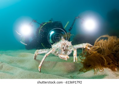 King crab on the seabed and photographer