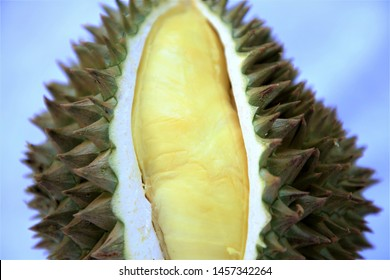King of fruits Thailand,durian(Mon Thong durian),durians on organic farm in South East Asia.Durian growing on tree