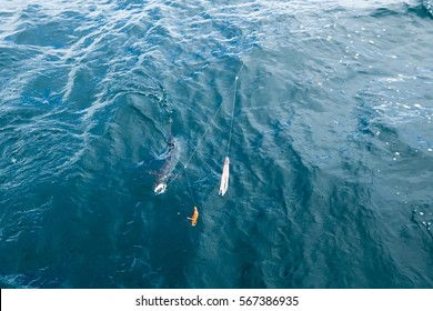 King mackerel fishing from sailing boats in the Andaman Sea of the Indian Ocean between Thailand and Malaysia
