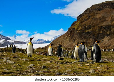 King penguins and amazing Antarctic landscape in Fortuna Bay, South Georgia, Antarctic region