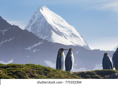 King Penguins at St Andrews Bay, the worlds largest king penguin colony with the mountains of South Georgia in the background