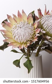 King protea flower bouquet in bloom close up still on a white background