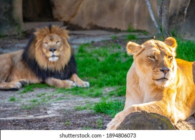 King and Queen on the Lookout