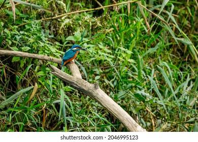Kingfisher bird sitting on the branch