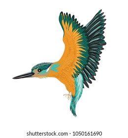 Kingfisher isolated. Vector illustration of a bird on white background