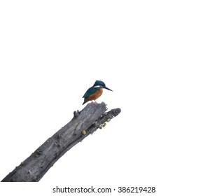Kingfisher Minimalism