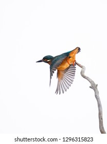 Kingfisher moments isolate
