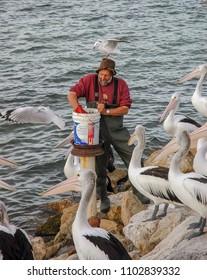 Kingscote, Australia. Circa May 2005. Australian pelicans watch as The Pelican Man arrives to feed them in Kinsgcote wharf, Kangaroo island.