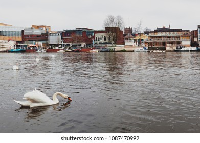 Kingston upon Thames, United Kingdom - April 2018: Flock of swans and waterbirds at Riverside Walk promenade by the River Thames in Kingston, England