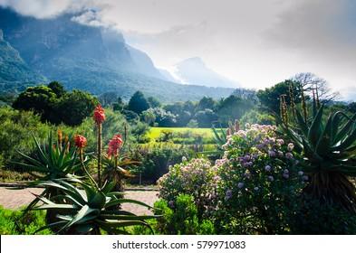 Kirstenbosch Botanical Garden in Cape Town, Western Cape, Republic South Africa.