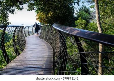 Kirstenbosch Centenary Tree Canopy Walkway, Cape Town, Western Cape, Republic South Africa.
