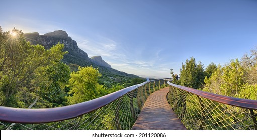 Kirstenbosch National Botanical Garden is acclaimed as one of the great botanic gardens of the world. Located in Cape Town, South Africa, the new tree top canopy walk is a tourist favorite.