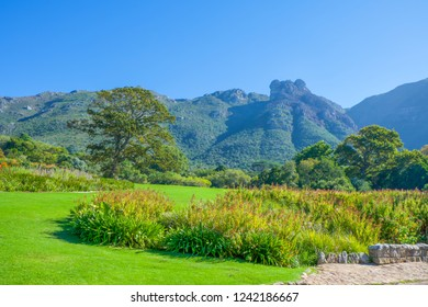 Kirstenbosch National Botanical Garden, Cape Town, South Africa.