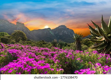 Kirstenbosch National Botanical Garden during sunset in Cape Town South Africa