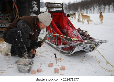 KIRUNA, SWEDEN - DECEMBER 19: Male Husky sledder prepares food for dogs in the freezing arctic winter on DECEMBER 19, 2012 in Sweden.