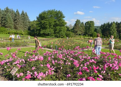 Kislovodsk, Russia - July 2017:  Valley of roses in the resort park.