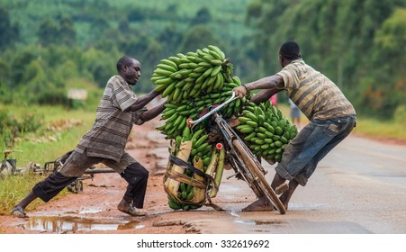 KISORO, UGANDA, AFRICA - MAY 10, 2013: Kisoro. Uganda. Africa. The young man is lucky by bicycle on the road a big linking of bananas to sell on the market. May 10, 2013. Kisoro. Uganda. Africa.