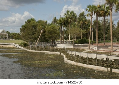 KISSIMMEE, FL, USA - SEPTEMBER 12, 2017 : The winds of Hurricane Irma pulled a large amount of vegetation out of Lake Tohopekaliga, leaving a mess at Kissimmee Lakefront Park.