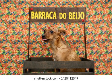 """KISSING BOOTH"" Festa Junina: party in Brazil in the month of june. Dog inside kissing booth."