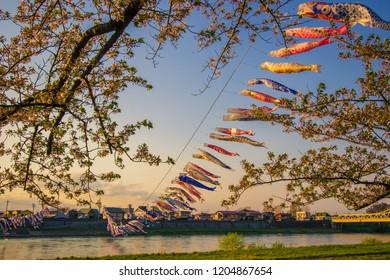 Kitakami,Iwate,Tohoku,Japan on April 26,2018:Carp streamers (or koinobori) over the Kitakami River and cherry blossoms at Tenshochi Park during sunset.