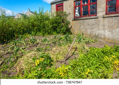 Kitchen Garden Rugged Vegetable Patch Growing Stock Photo Edit Now