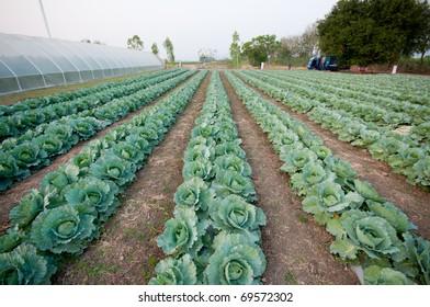 kitchen garden, vegetable garden