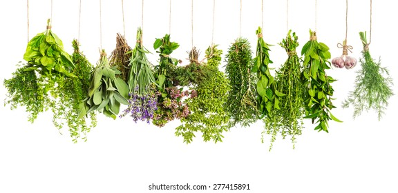 Kitchen herbs hanging isolated on white background. Food ingredients. Healthy eating concept