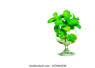 kitchen mint leaf in Balloon glass  isolated on white background. can used for herb or food articles. Copy space for text or objects.