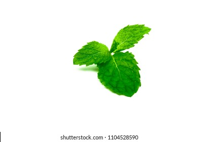Kitchen mint leaf isolated on white background. Green peppermint natural source of menthol oil. Thai herb for food garnish. Herb for anti-flatulence and make confident fresh breath.
