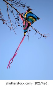 A kite caught in a gumball tree.