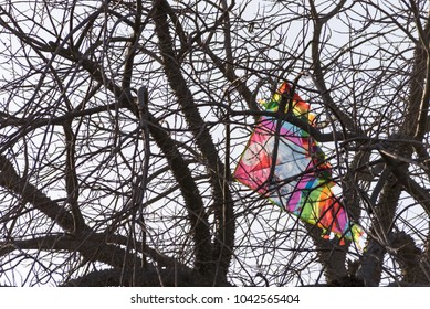 Kite stuck in a tree branch