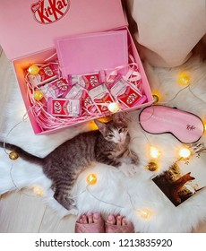 KitKat cute fluffy cat pet kitten lying on floor with lights and pink KitKat presents gifts and chocolate box with book and pink glasses box.