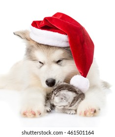 Kitten and alaskan malamute puppy in red santa hat. isolated on white background