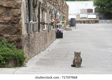Kitten alone in a cemetery. Tabby cat with gravestones behind.