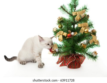 Kitten and artificial Christmas tree. On the eastern calendar 2011 - the year the cat.
