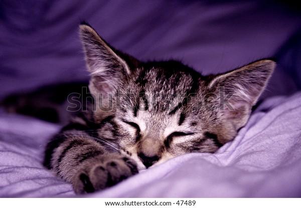 A kitten asleep